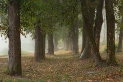 Ομιχλώδη δέντρα στο πάρκο Στοκ εικόνα με δικαίωμα ελεύθερης χρήσης