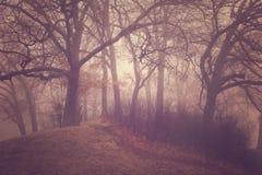 ομιχλώδη δέντρα Στοκ εικόνες με δικαίωμα ελεύθερης χρήσης