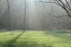 Ομιχλώδη ξύλα πρωινού Στοκ Φωτογραφίες