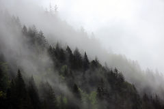 Ομιχλώδη σύννεφα που αυξάνονται από το αλπικό δάσος βουνών Στοκ Εικόνα