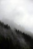 Ομιχλώδη σύννεφα που αυξάνονται από το αλπικό δάσος βουνών Στοκ Φωτογραφία