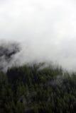 Ομιχλώδη σύννεφα που αυξάνονται από το αλπικό δάσος βουνών Στοκ Εικόνες