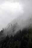 Ομιχλώδη σύννεφα που αυξάνονται από το αλπικό δάσος βουνών Στοκ εικόνες με δικαίωμα ελεύθερης χρήσης
