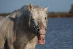 Ομιλούν άλογο στοκ εικόνες