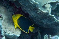 Ομορφιά βράχου στην κοραλλιογενή ύφαλο Στοκ εικόνα με δικαίωμα ελεύθερης χρήσης