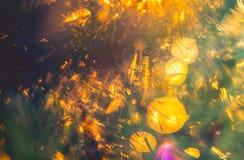 Ομορφιά λεπτομέρειας φύσης Στοκ φωτογραφία με δικαίωμα ελεύθερης χρήσης