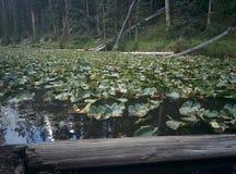 Ομορφιά στη φύση Στοκ Εικόνες