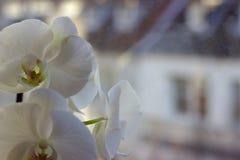 Ομορφιά στο σπίτι στοκ εικόνα με δικαίωμα ελεύθερης χρήσης