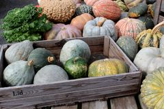Ομορφιά της γενναιοδωρίας της πτώσης που βλέπει στις βεραμάν και πορτοκαλιές ζωηρόχρωμες κολοκύθες και την κολοκύνθη στην αγορά α στοκ εικόνα με δικαίωμα ελεύθερης χρήσης