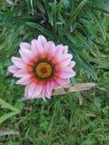 Ομορφιά της Παπούα Νέα Γουϊνέα στοκ φωτογραφία με δικαίωμα ελεύθερης χρήσης