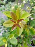Ομορφιά της φύσης στοκ φωτογραφία με δικαίωμα ελεύθερης χρήσης