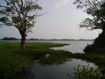 Ομορφιά του δέντρου βραδιού από τη λίμνη στοκ εικόνες