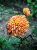 ομορφιά του λουλουδιού στοκ εικόνα με δικαίωμα ελεύθερης χρήσης