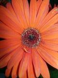 Ομορφιά του λουλουδιού Στοκ φωτογραφία με δικαίωμα ελεύθερης χρήσης