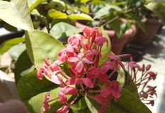 Ομορφιά των λουλουδιών στοκ εικόνα