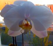 Ομορφιά των λουλουδιών Στοκ Φωτογραφίες