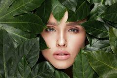 ομορφιά φυσική Όμορφο πρόσωπο γυναικών στα πράσινα φύλλα Στοκ Εικόνα