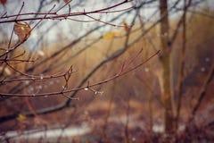 ομορφιά φυσική Στοκ εικόνες με δικαίωμα ελεύθερης χρήσης