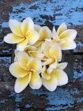 Ομορφιά φύσης λουλουδιών στοκ φωτογραφίες με δικαίωμα ελεύθερης χρήσης