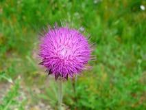 Ομορφιά φύσης στοκ φωτογραφίες με δικαίωμα ελεύθερης χρήσης