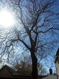 Ομορφιά φύσης Στοκ φωτογραφία με δικαίωμα ελεύθερης χρήσης
