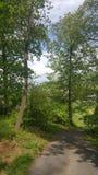 Ομορφιά φύσης Στοκ Εικόνες