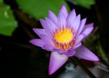 ομορφιά aqua στοκ εικόνες με δικαίωμα ελεύθερης χρήσης