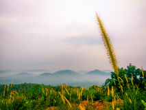 Ομορφιά Calicut στοκ φωτογραφίες με δικαίωμα ελεύθερης χρήσης