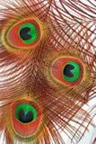 ομορφιές που γυαλίζοντ&al Στοκ εικόνα με δικαίωμα ελεύθερης χρήσης