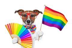 Ομοφυλοφιλικό σκυλί υπερηφάνειας Στοκ εικόνα με δικαίωμα ελεύθερης χρήσης