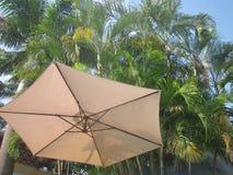 Ομπρέλα κάτω από τους φοίνικες Στοκ Φωτογραφίες