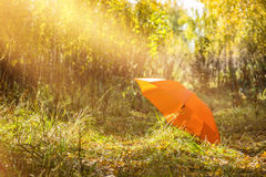 Ομπρέλα στο δάσος φθινοπώρου Στοκ Φωτογραφίες