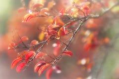 Ονειροπόλα φθινοπωρινά φύλλα Στοκ Εικόνα