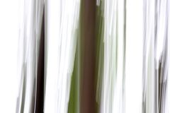 Ονειροπόλος εικόνα των κορμών δέντρων και του άσπρου ουρανού που γίνονται με την τεχνική γνωστή ως βράση στους φωτογράφους στοκ φωτογραφίες