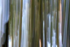 Ονειροπόλος εικόνα των κορμών δέντρων, της χλόης, του μπλε και άσπρου ουρανού που γίνονται με την τεχνική γνωστή ως βράση στους φ στοκ εικόνες με δικαίωμα ελεύθερης χρήσης