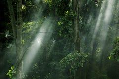 ονειροπόλο δασικό φως Στοκ Εικόνα