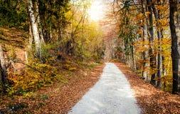 Ονειροπόλο φυσικό τοπίο του δασικού δρόμου πέρα από το πορτοκαλί ξύλο φθινοπώρου Στοκ φωτογραφία με δικαίωμα ελεύθερης χρήσης