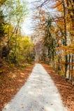 Ονειροπόλο φυσικό τοπίο του δασικού δρόμου πέρα από το πορτοκαλί ξύλο φθινοπώρου Στοκ Εικόνες