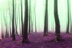 Ονειροπόλος απόκοσμη υδρονέφωση στο δάσος Στοκ εικόνες με δικαίωμα ελεύθερης χρήσης