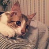 Ονειροπόλο γατάκι Στοκ φωτογραφία με δικαίωμα ελεύθερης χρήσης