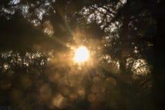 Ονειροπόλο κίτρινο θερμό starburst στοκ εικόνα