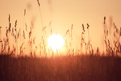 Ονειροπόλο υπόβαθρο θερινής χλόης στο ηλιοβασίλεμα Στοκ Φωτογραφίες