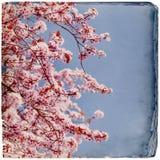 Ονειροπόλο υπόβαθρο springflowers στοκ εικόνες