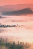 Ονειροπόλο misty δασικό τοπίο Οι μεγαλοπρεπείς αιχμές των παλαιών δέντρων κόβουν την υδρονέφωση φωτισμού που η βαθιά κοιλάδα είνα Στοκ Εικόνα