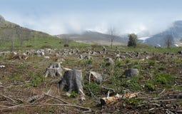 οξιά που είναι καταστροφή αποκοπών της Βουλγαρίας κάτω από το δασικό pirin βουνών κούτσουρων Στοκ Φωτογραφίες