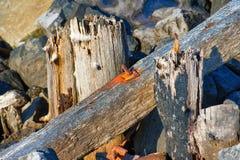 Οξυδωμένος σίδηρος που ενσωματώνεται στο ξύλο κατά μήκος του νότιου λιμενοβραχίονα στοκ εικόνα με δικαίωμα ελεύθερης χρήσης