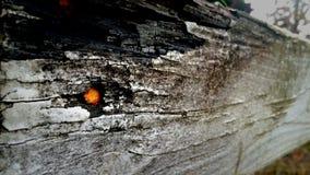 Οξυδωμένο καρφί Στοκ Εικόνες