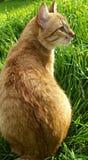 Οπίσθια γάτα Στοκ εικόνα με δικαίωμα ελεύθερης χρήσης