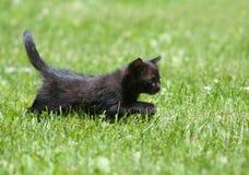 οπίσθια πόδια γατακιών τι&gamma Στοκ εικόνα με δικαίωμα ελεύθερης χρήσης