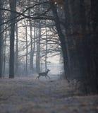 Οπίσθιος στο δάσος στο χειμώνα στοκ φωτογραφία